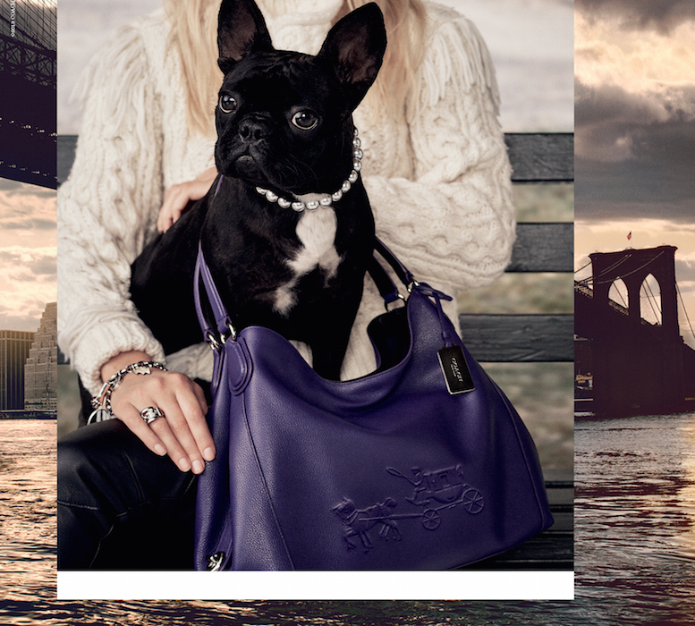 LADY GAGA DOG MISS ASIA KINNEY fashiondailymag