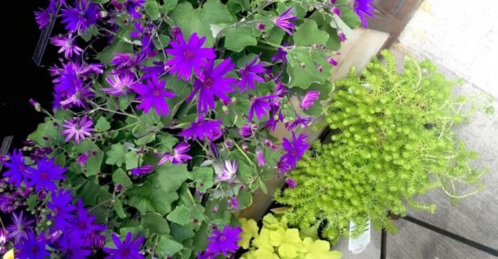 flowers for earth month ph brigitte segura FashionDailyMag earth month