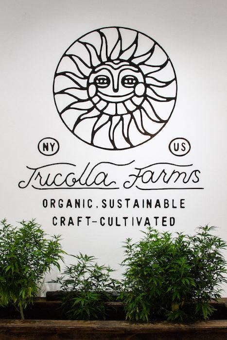 TONIC CBD TRICOLLA FARMS fashion daily mag brigitteseguracurator 123
